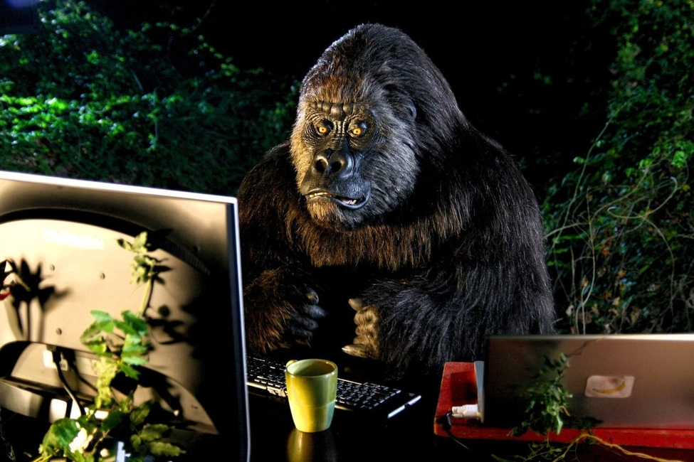 rsz_1rsz_rsz_gorilla-web-photo